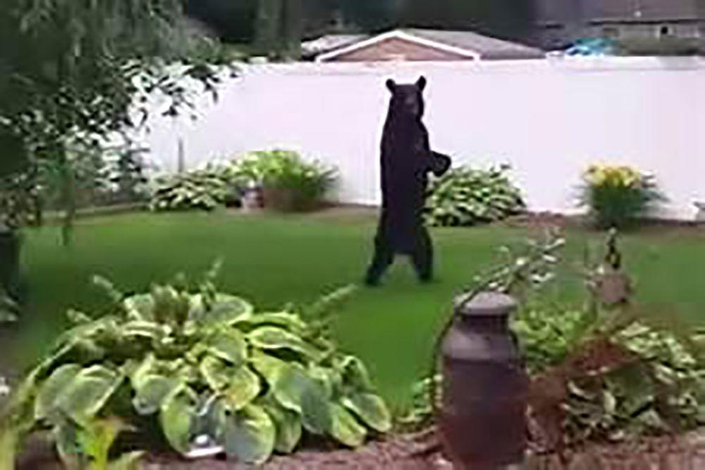 Upright bear