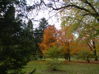Fall Trees in the Parks