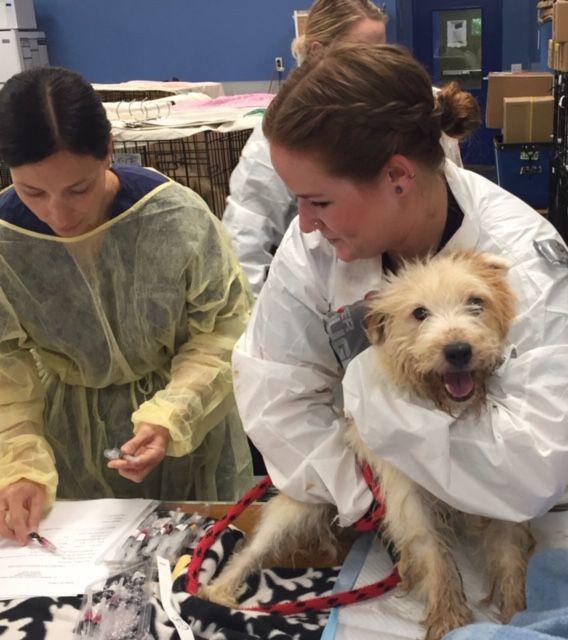 188 dogs rescued in Hunterdon animal cruelty investigation