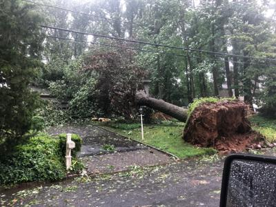 Tropical storm uproots trees, closes roads in Warren Township