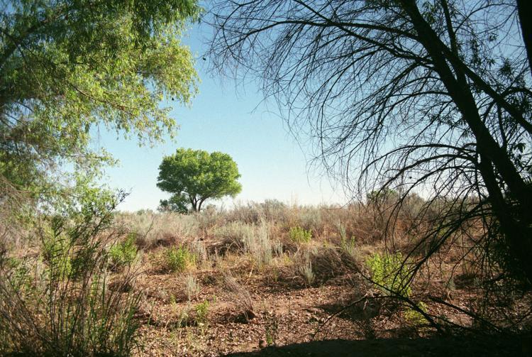 Along the San Pedro River - Roberta C. Scott