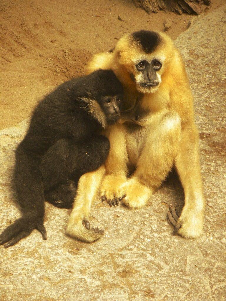 Murphy's monkeys