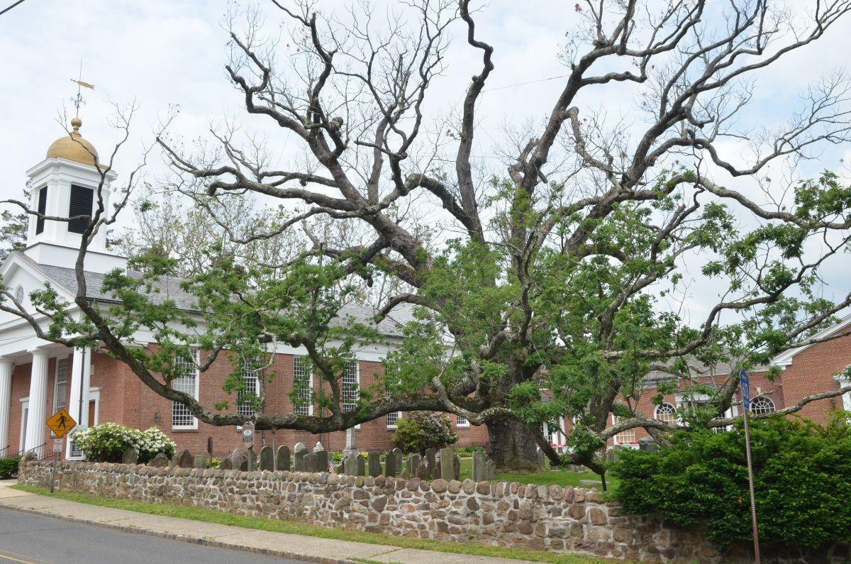 Historic Tree