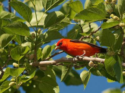 NJ Conservation Foundation bird walks are back starting Wednesday, April 28