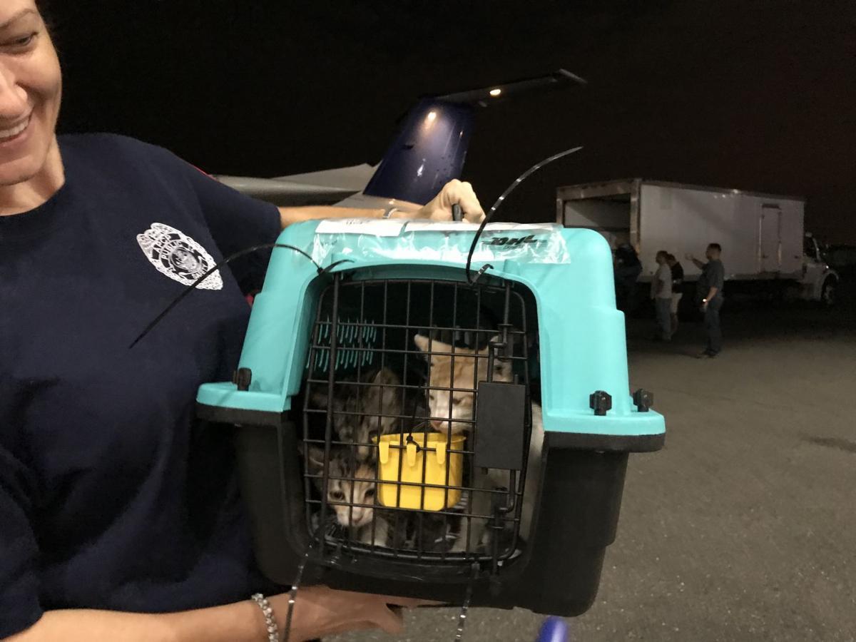 Save a gato