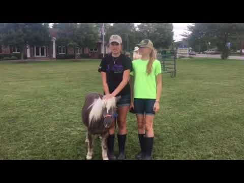 """(VIDEO) """"Rosie'' the therapy horse takes Long Valley Market debut in stride"""