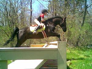 Olijslager is equestrian champion