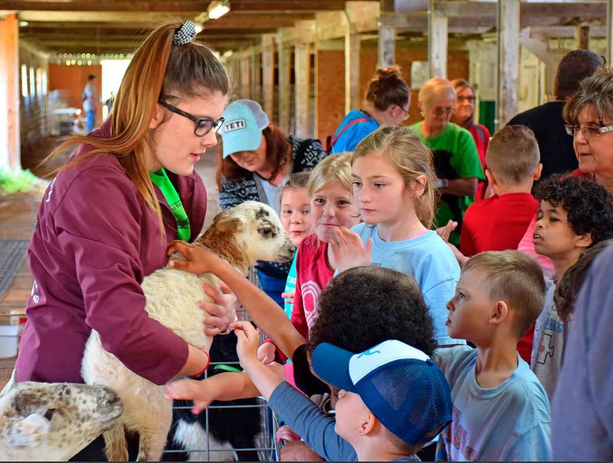 Students pet lamb