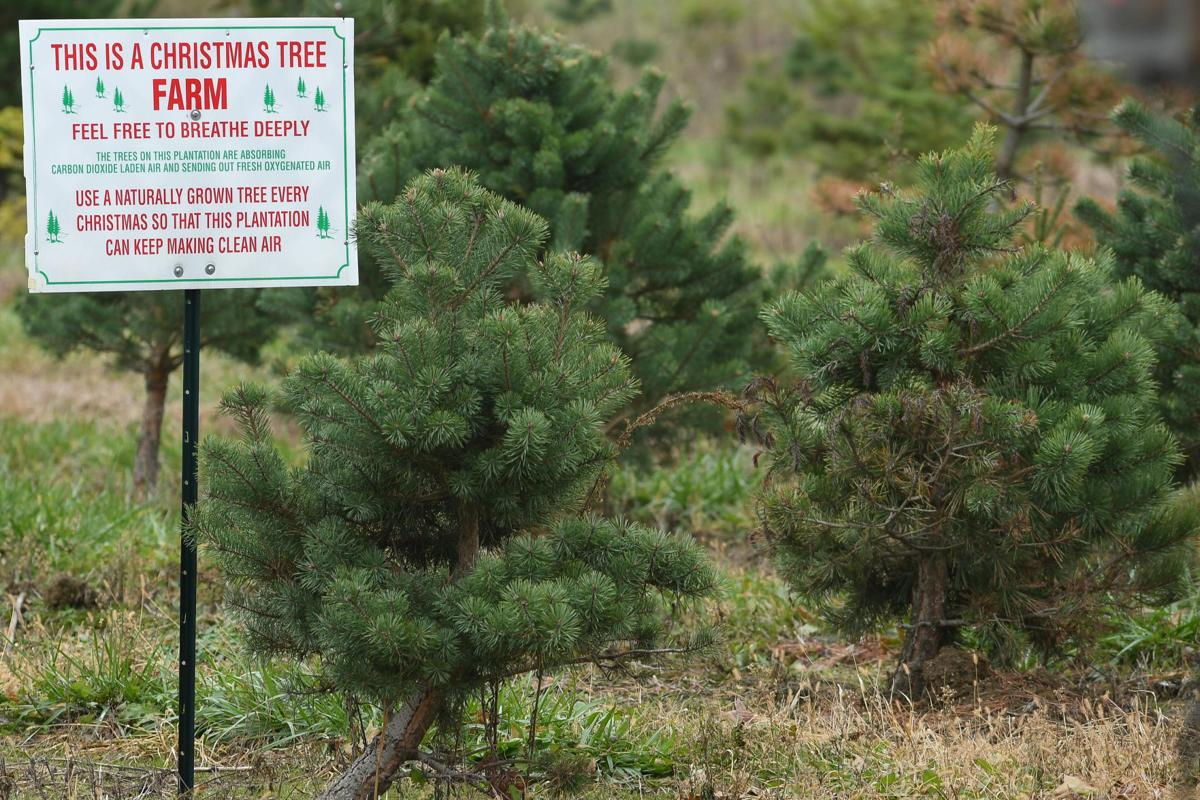 Northeast Ohio Farms Where You Can Cut Your Own Christmas Tree