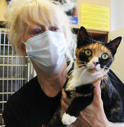 Clear the Shelters a success locally