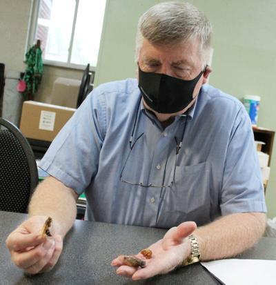 Cicadas will surface in community