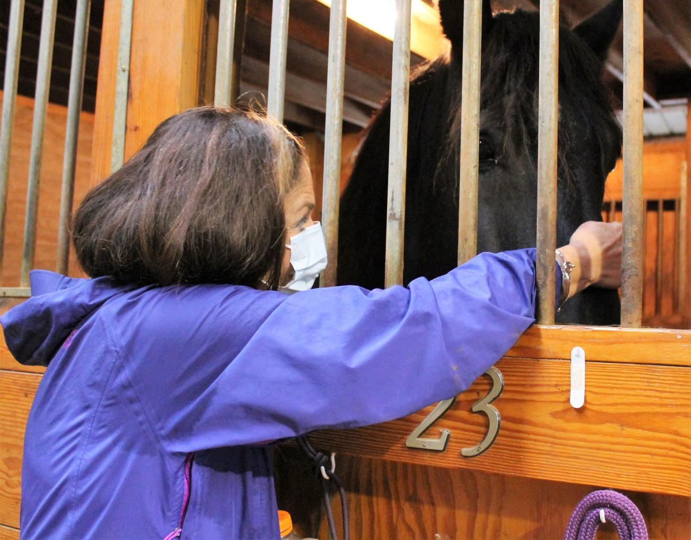 Horse Haven fundraiser sees success