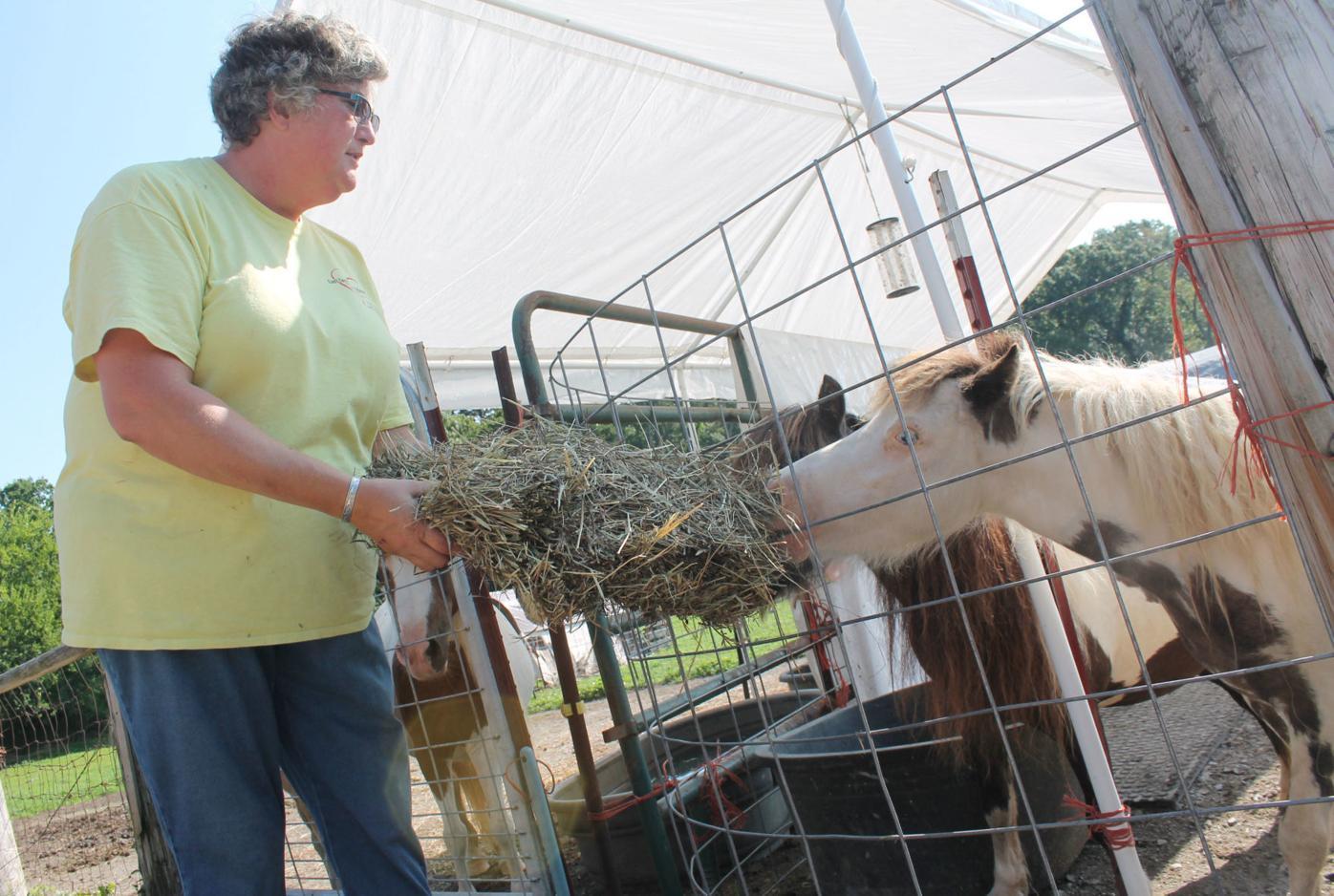 Animal rescue a 'labor of love'