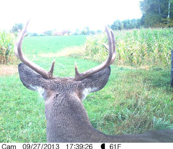 Buck's eye view