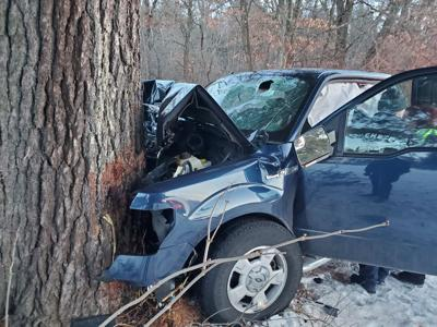 Pine tree crash