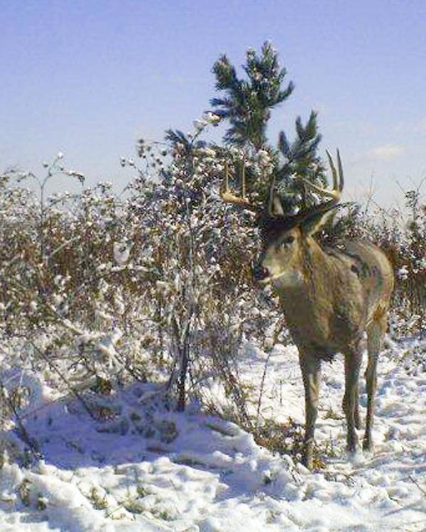Backyard buck