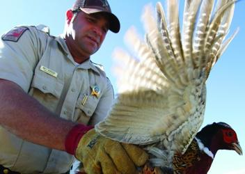 Dnr game warden cover letter