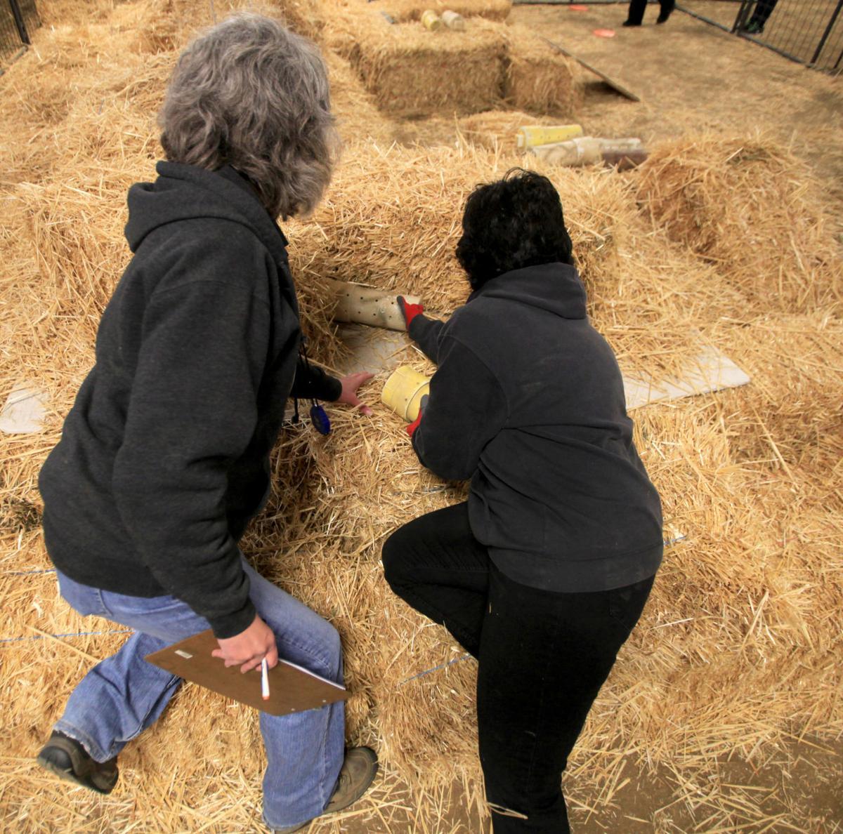 'Barn Hunt' Proves Popular At AKC Show