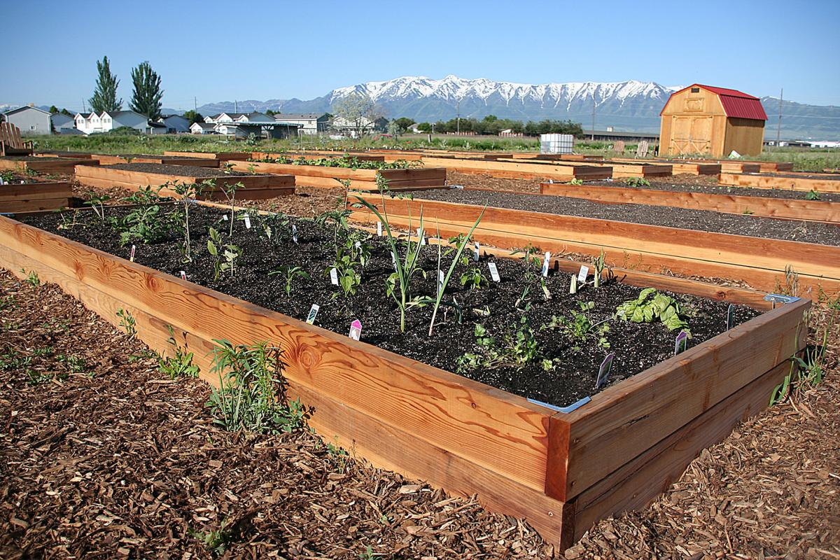 Thumbnail for Logan Community Gardens improved for second year