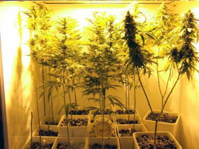 Argo pot house's 'elaborate grow operation' busted | News