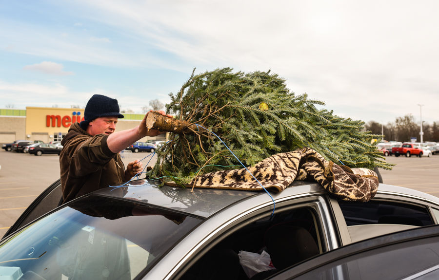 ROOTED IN TRADITION: Martin's Christmas Trees Marks 50