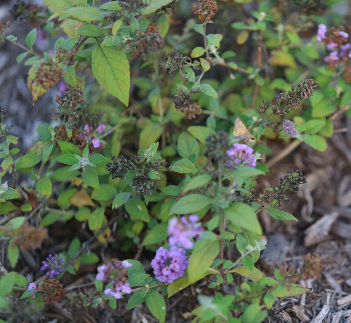 Ivy Tech Garden-2