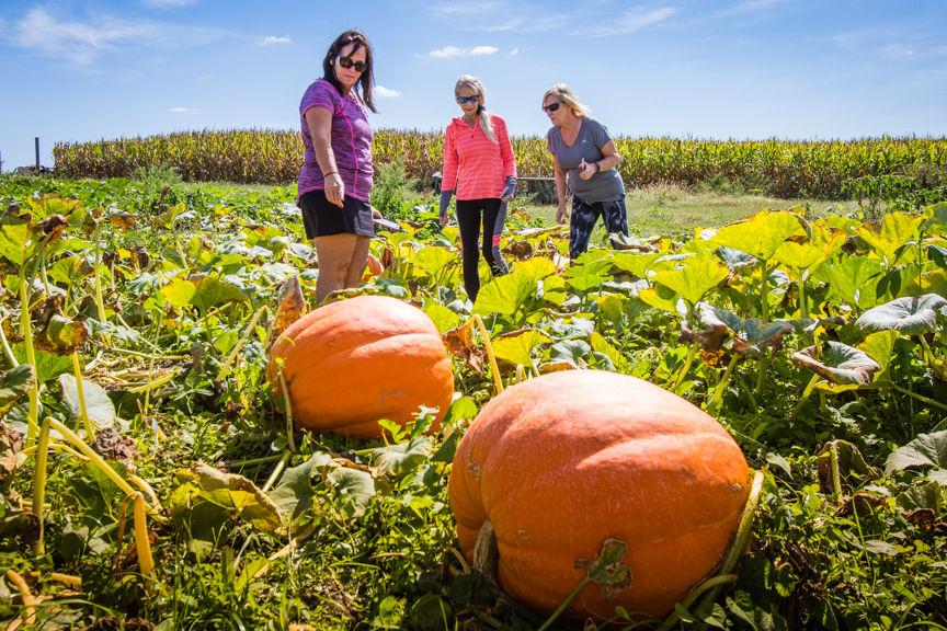 Roadside Pumpkin Shed Near Sellersburg Offers Everything Autumn