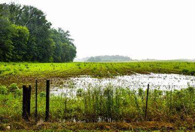Flooded Farms-1.jpg (copy)