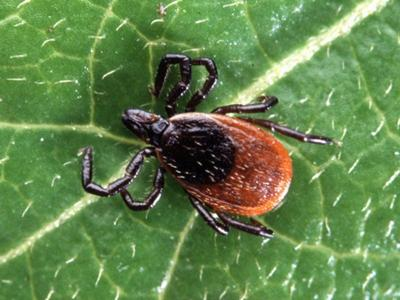 Lyme disease victims in Massachusetts lobby for long-term coverage