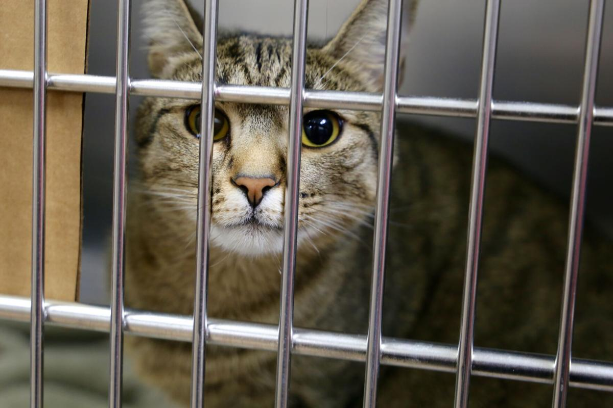 Defund The Animal Shelter Floyd County Council Declines To Commit To 2021 Budget News Newsandtribune Com