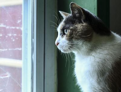APA Cat Shelter-1 (copy)