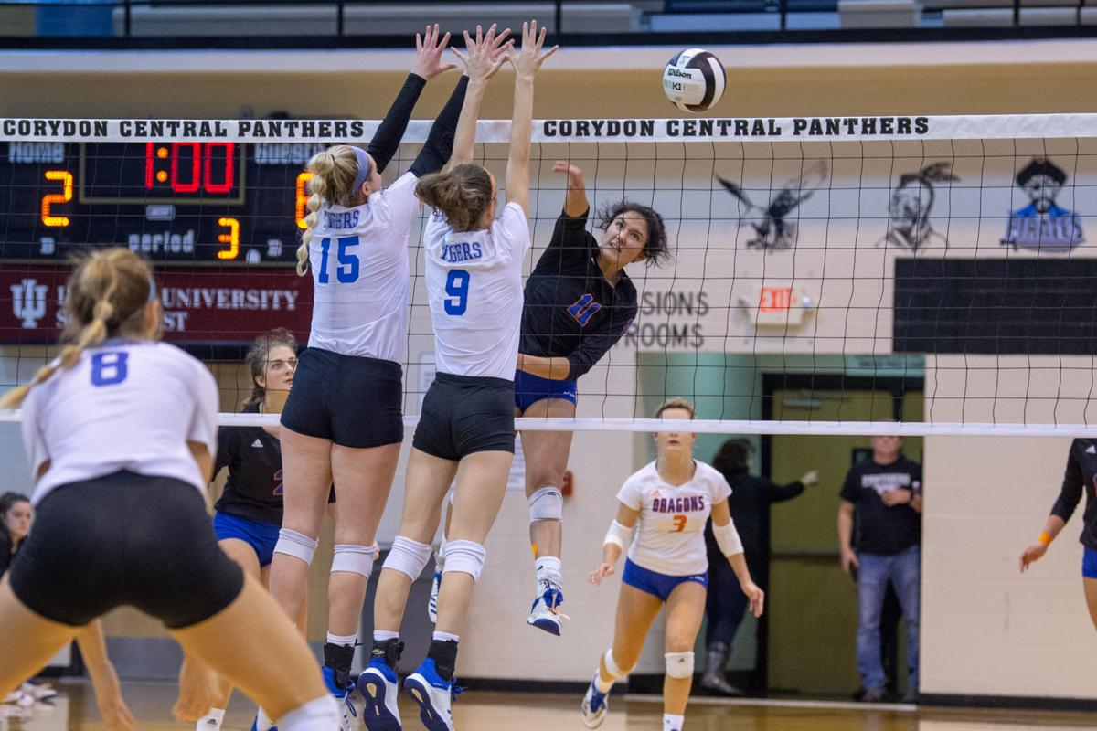 Volleyball Top Ranked Tigers Down Dragons In Regional Final Sports Newsandtribune Com