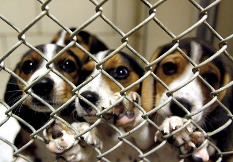 Floyd County Animal Control Restored News Newsandtribune Com