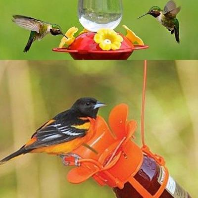 Hummingbirds and Orioles