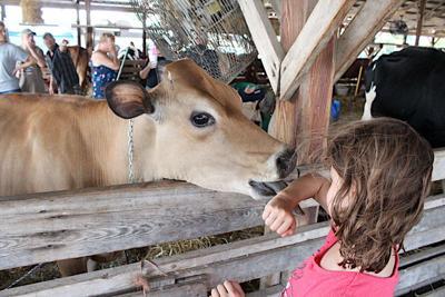 2021 White County Fair