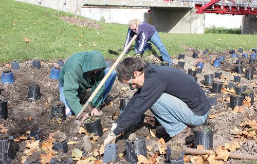 Deep Mulch Gardening , Rain Garden To Reduce Pollutants In Iroquois