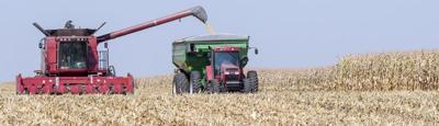 Harvest Story Pic 1.jpg