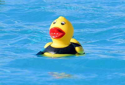 Bright yellow ducks
