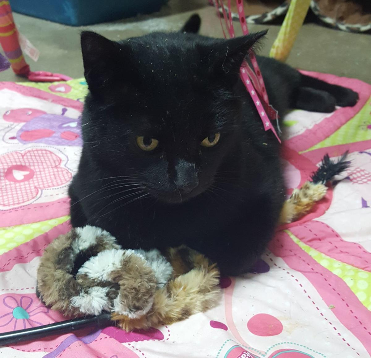 happy tails protects cats during halloween | monticello herald