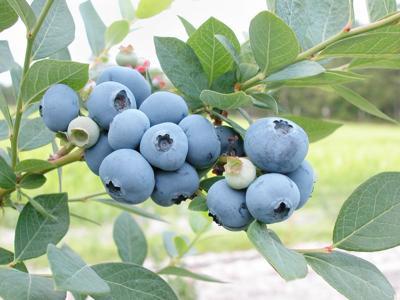 MG Fruit Program Pic 1.jpg