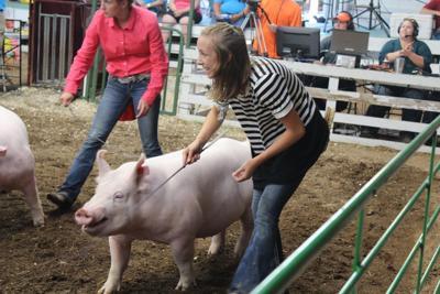 White County 4-H Fair starts Friday | Monticello Herald