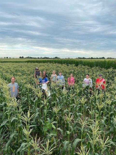 Corn picking group