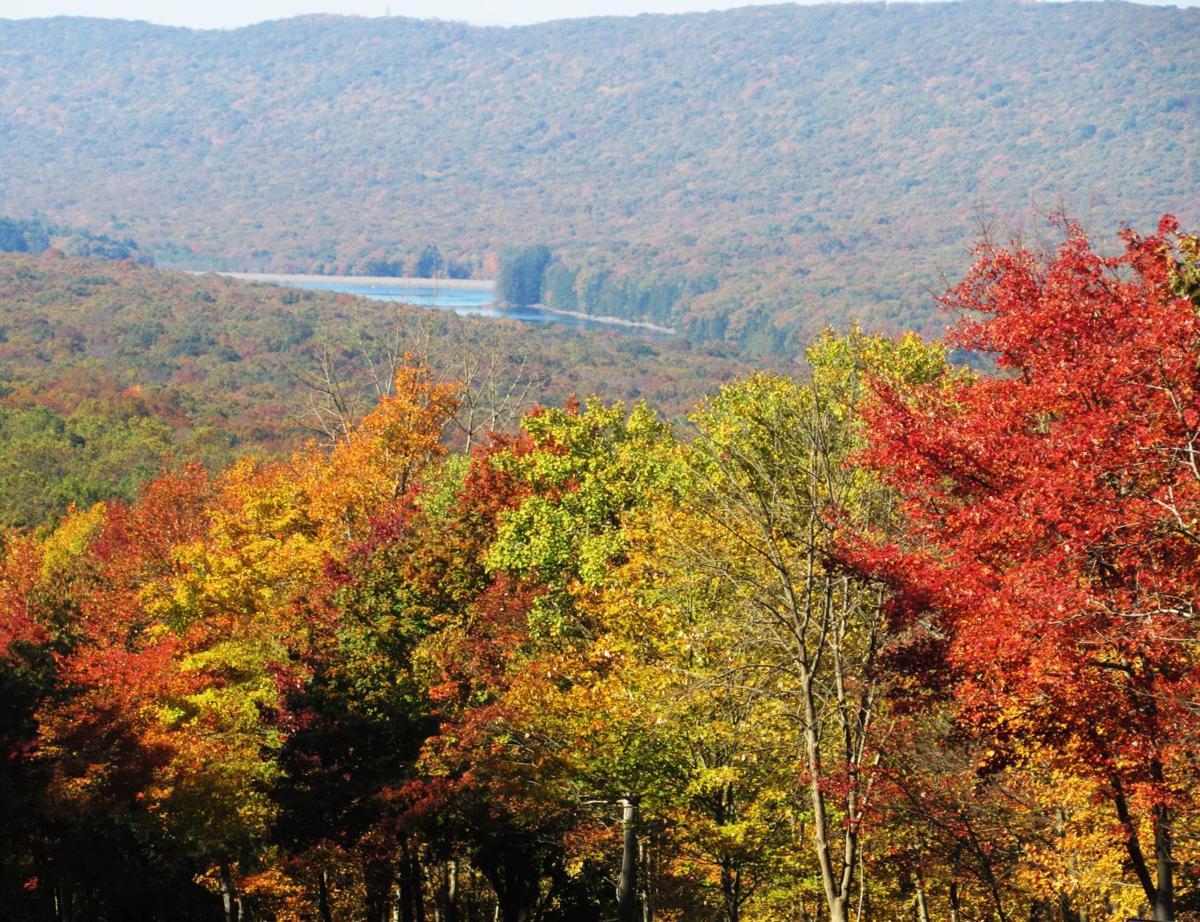 Fall colors at Roaring Creek