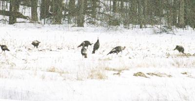 Surveys for hunting