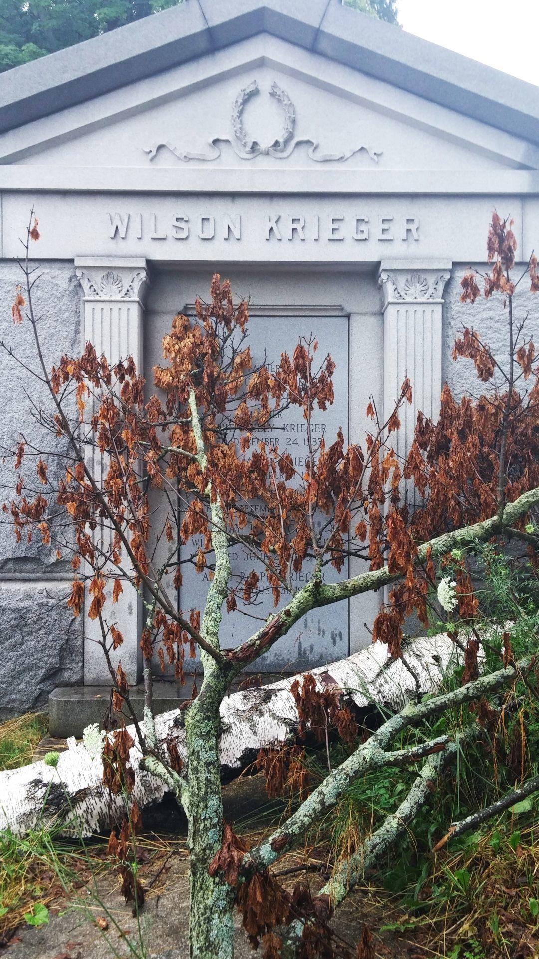 Fallen tree blocks Wilson Krieger mausoleum