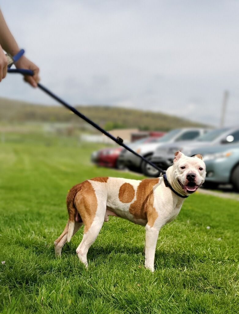 PSPCA removes 12 animals from Shamokin RV