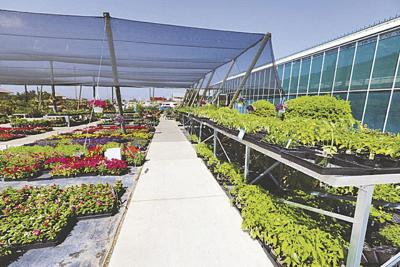 Sunshine Growers Nursery is a one-stop shop for all your gardening needs