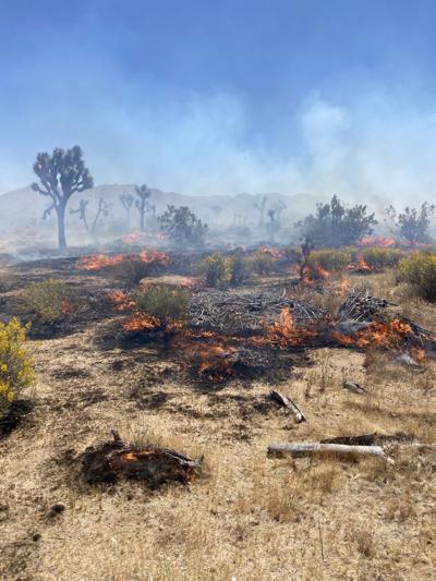 Joshua Tree Fire Burns 150 Acres