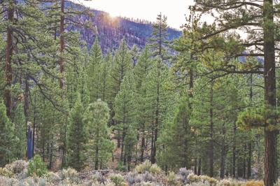 National Forests campgrounds closed