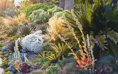California home drought tolerant plants for landscape design